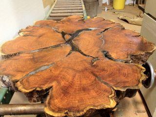 Mesquite End Grain Slab Burl Round Coffee Table