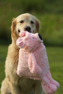 Big Gallon Milk Bottle 19 Large Pink Pig Stuffing Free Plush Dog
