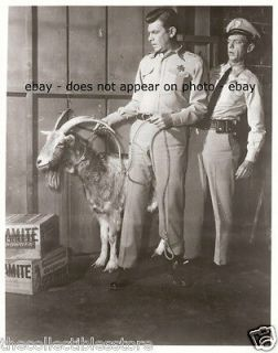 ANDY GRIFFITH TAYLOR TV SHOW DON KNOTTS BARNEY FIFE LOADED GOAT 8 X 10