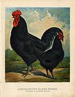 Antique Poultry Print BLACK LANGSHAN CHICKEN CHINA Volschau 1888