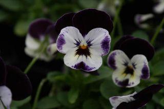 mickey in Flowers, Trees & Plants