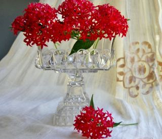 Scalloped Rim Antique EAPG Adams Crystal Wedding Compote